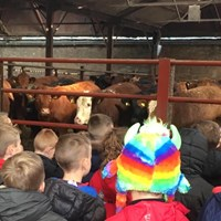 Down on the farm - Sara Smith, Learning and Development Co-ordinator